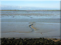 TQ9466 : Swale mud by Robin Webster