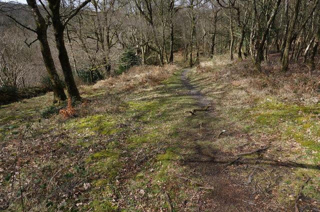 Path in Yarner Wood