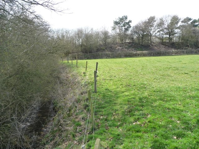 Wooded embankment, former Stokesley railway line