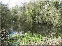 TG2103 : Pond beside Mangreen by Evelyn Simak
