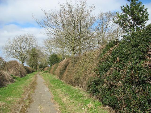 Hedgerows beside Mangreen