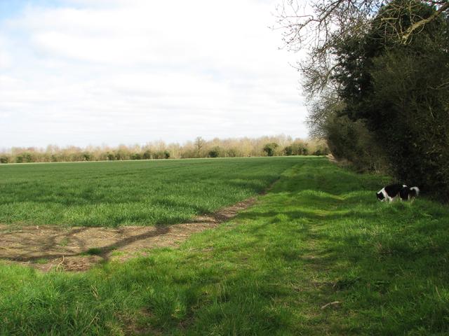 Crop field north of Mangreen Hall