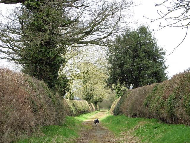 Cut hedgerows beside Mangreen