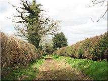 TG2103 : Old oak trees growing beside Mangreen by Evelyn Simak