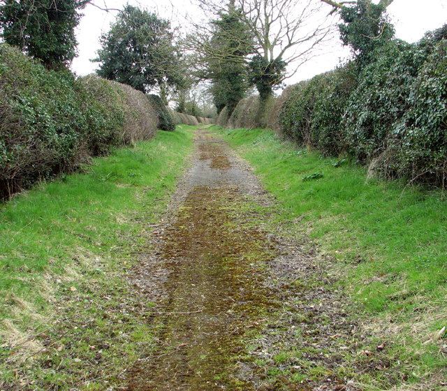 Mossy road surface