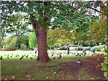TF0920 : Feeding the birds at Bourne, Lincolnshire by Rex Needle
