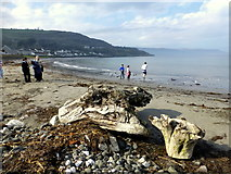 D3115 : Driftwood, Glenarm by Kenneth  Allen