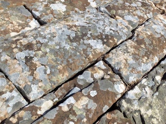 Detail of lichen