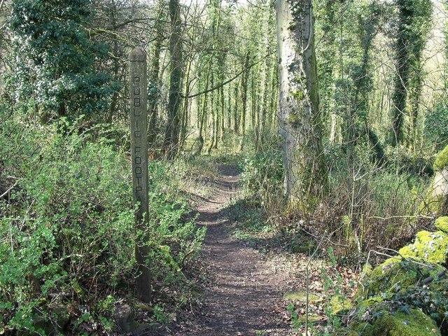 Footpath into Star Wood