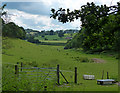 SO8282 : Shallow valley near Kinver Edge by Mat Fascione