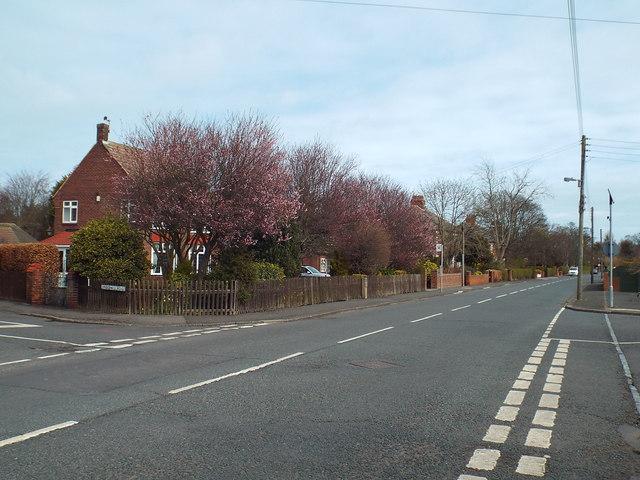 Whitburn Road, Cleadon