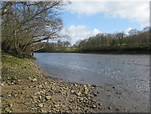 NZ1265 : River Tyne by G Laird