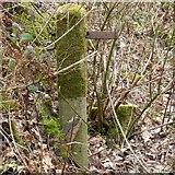 SJ9694 : Moss on concrete by Gerald England