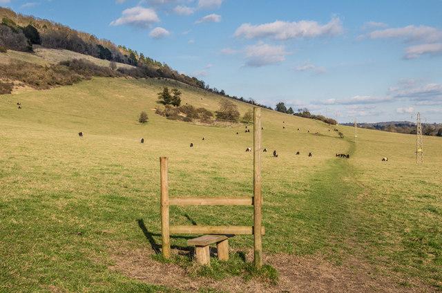 Grazing land, Lower Box Hill Farm
