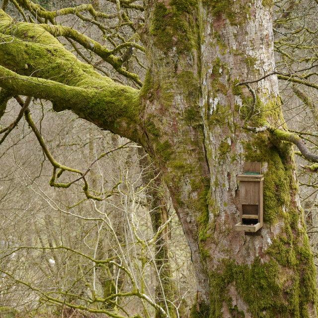 Bird feeder by the Squirrel Hut, Kielder Castle