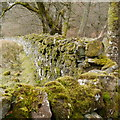 NY6393 : Mossy wall by Castle Wood by Rich Tea