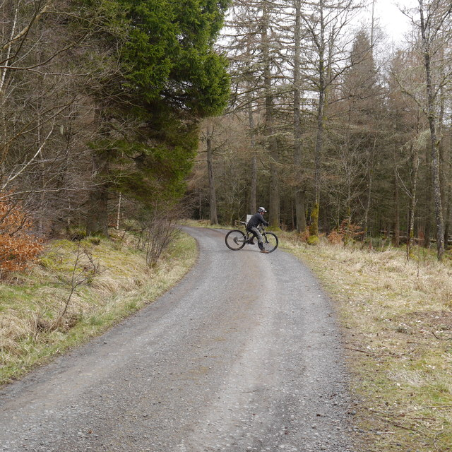 Cyclist waiting on a forest road, Kielder Forest