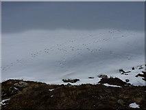 NN6681 : Hare tracks on snow by Richard Law