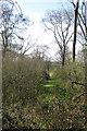 SP9949 : Path through Hangar Wood by Philip Jeffrey