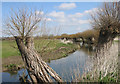 SP7210 : River Thame at Chearsley by Des Blenkinsopp