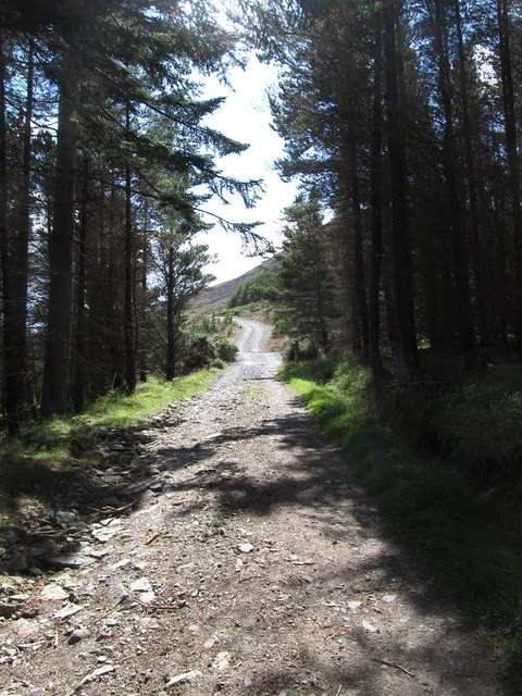 Emerging out of the Donard Forest below Thomas's Mountain Quarry
