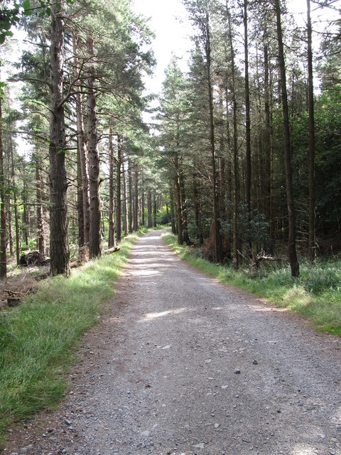 Forest track leading to Thomas's Mountain Quarry from the Glen River