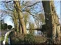 SP6412 : Fish Pond at Manor Farm by Des Blenkinsopp