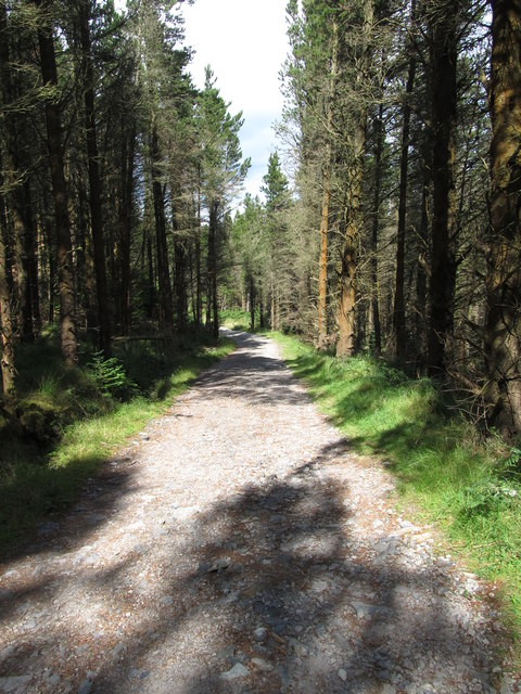Forest road leading towards Thomas's Mountain Quarry