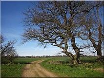 SE3953 : Bridleway to Little Ribston by Derek Harper