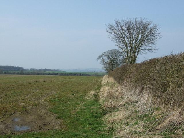 Farmland and hedgerow near Tranwell