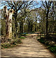 SO6514 : Dead tree and metal barrier at the southern edge of the Haywood Plantation, Cinderford by Jaggery