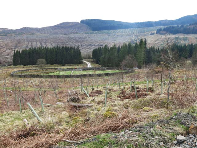 Forestry near Appin