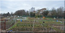 SJ4810 : Allotments by the railway line by N Chadwick
