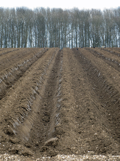 Potato Beds on Saxby Wolds