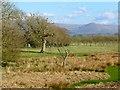 NY6224 : Pasture, Bolton by Andrew Smith