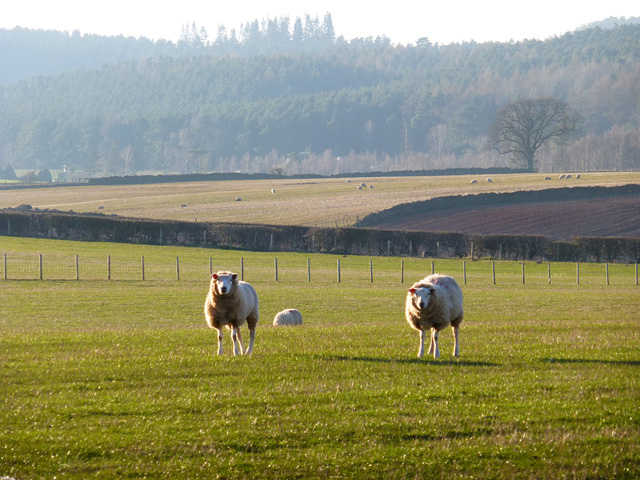 Pasture, Cliburn