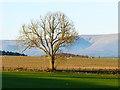 NY5926 : Farmland, Cliburn by Andrew Smith