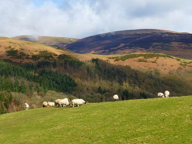Pasture, Castlerigg