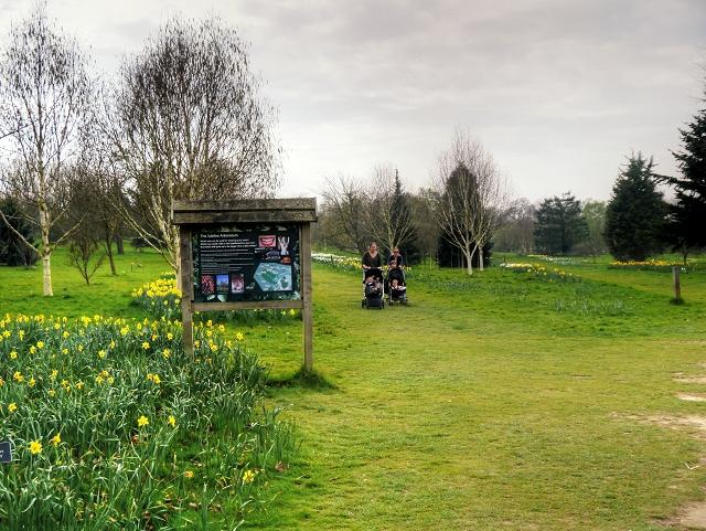 Jubilee Arboretum, RHS Garden at Wisley