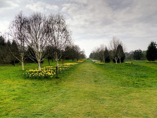 RHS Garden at Wisley, Jubilee Arboretum