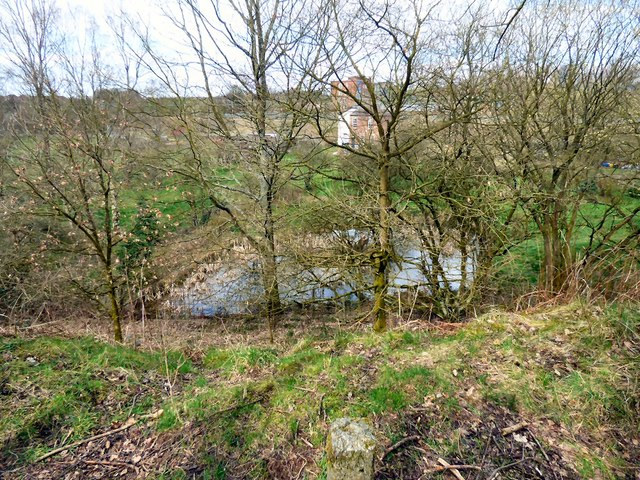 Pond at Godley East