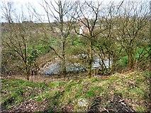 SJ9694 : Pond at Godley East by Gerald England