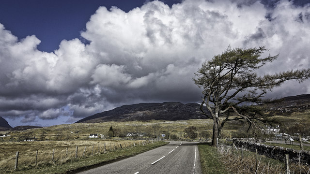 Tree by the A837 at Inchnadamph
