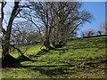 SX2283 : Hillside, Laneast by Derek Harper