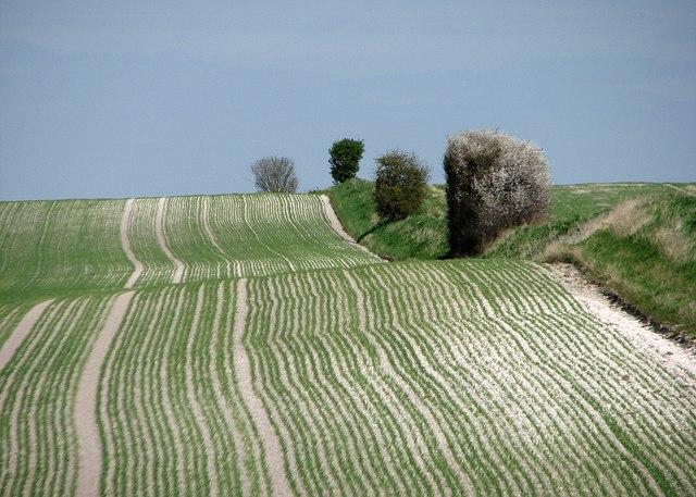 A fold in the hillside in spring