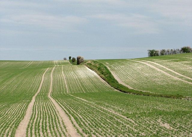A chalk hillside in spring