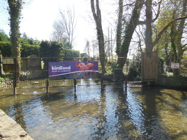 River Windrush near Birdland