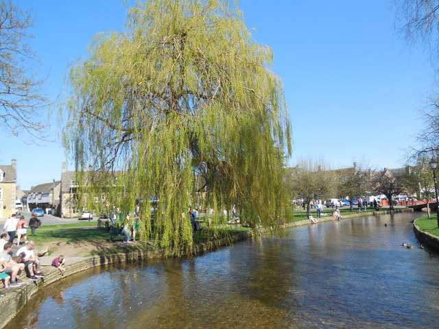 Weeping Willow by River Windrush