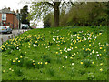 SK6826 : Daffodil Green, Upper Broughton by Alan Murray-Rust