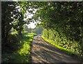 SJ7882 : Breach House Lane eastwards by Andrew Tatlow
